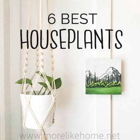 6 best favorite hard to kill houseplants easy care low maintenance